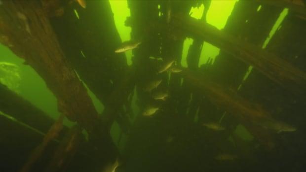The Mayflower's wreck