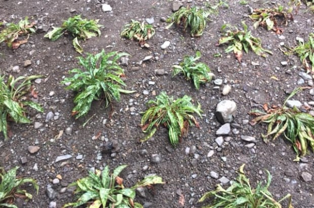 Plants Victoria Park