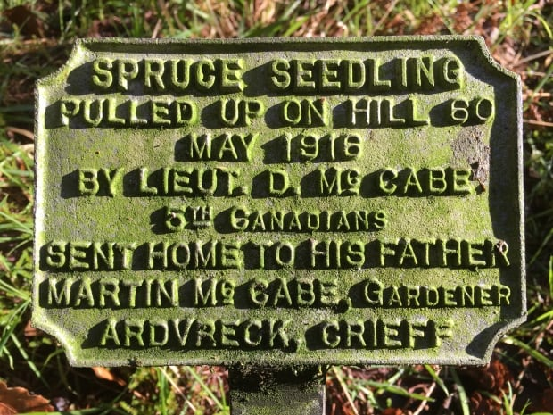 McCabe Spruce plaque