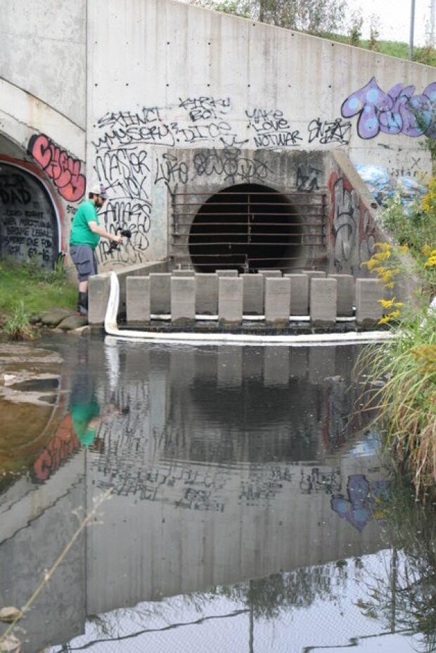 Drainage pipe into Fletchers Creek