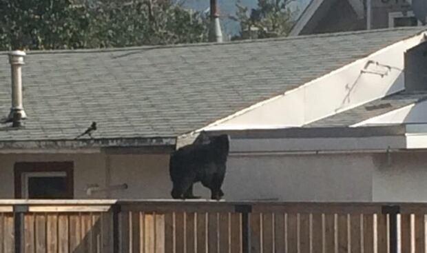 Charlie the bear