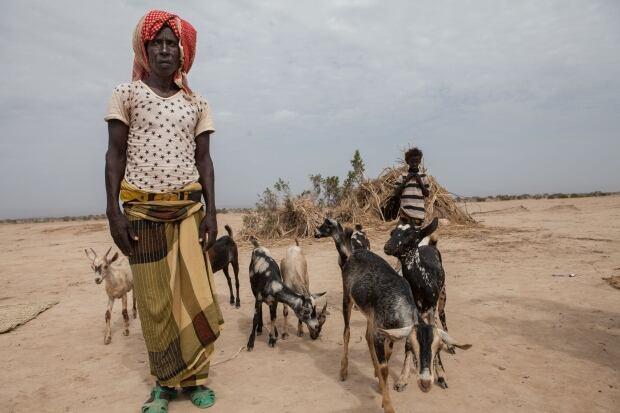 MCC aid/goats in Ethiopia