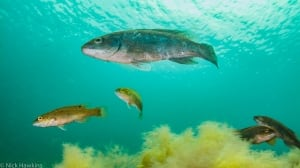 100 wild islands nature trust