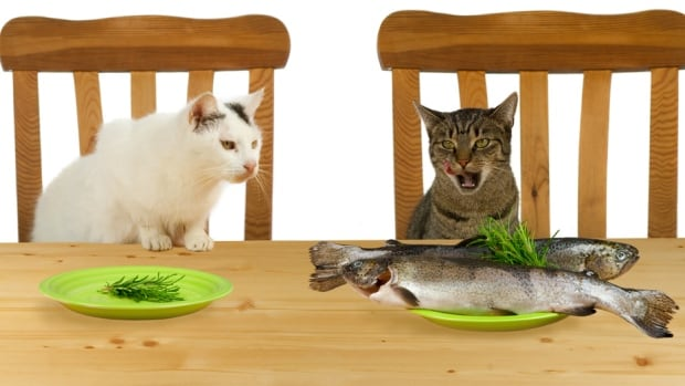 Quick! Is the cat displaying envy or jealousy?