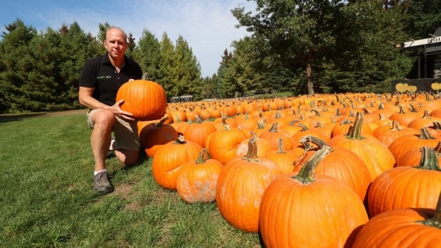 Mark Saunders poses with some of the pumpkins that Saunders Farm had to have shipped in after heavy spring rains destroyed his crops.