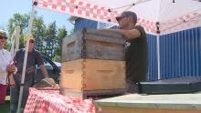 Hobby beekeeper - Hunter River - 23/9/17
