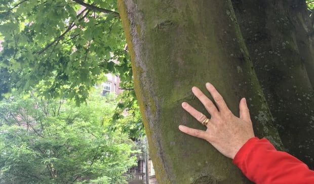 Woman's hand on tree trunk Vancouver