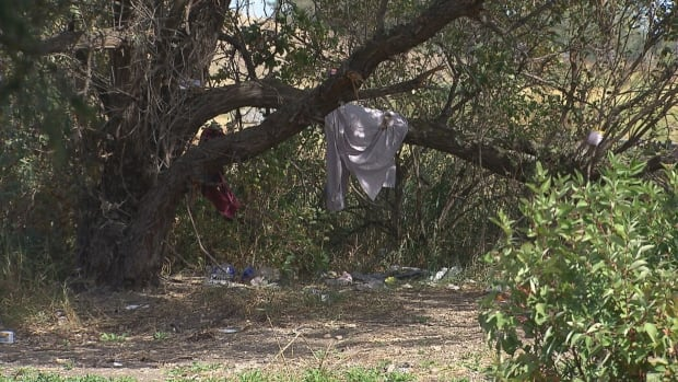 Clothes hang from a tree in Winnipegu0027s Westview Park part of an established homeless tent & Tent communities pushing into Winnipeg suburbs but resources ...