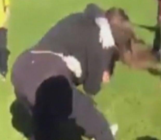 St. Peter's brawl screenshot 2