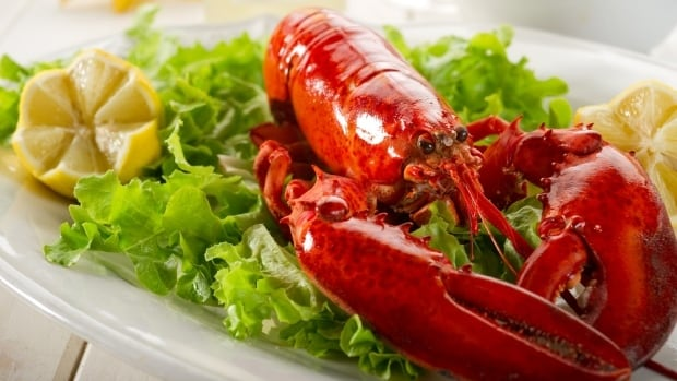 A researcher in animal behaviour says it's 'very likely' lobsters and other crustaceans can feel pain when they are boiled alive.