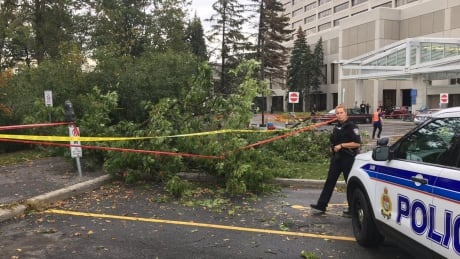 Woman critically injured after tree falls on her in Ottawa storm