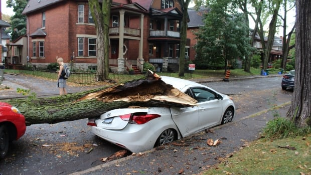 Very strong winds expected in Hamilton area Sunday