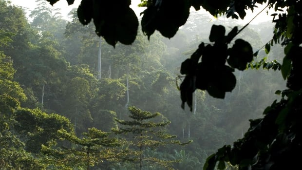Tropical Forests Worse Carbon Emitters Than US Trucks and Cars