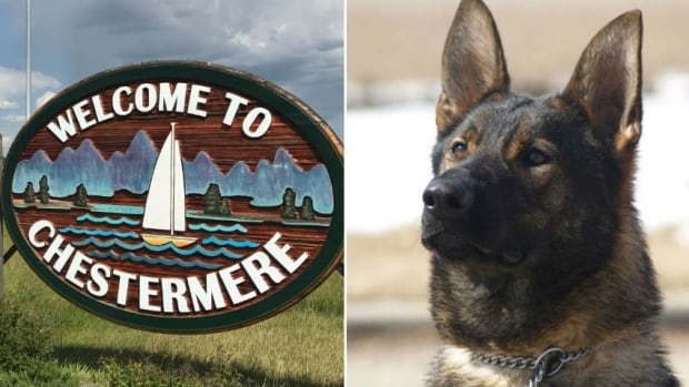 An RCMP dog is seen at right in this file photo. Mounties in Chestermere, Alta., say a police dog involved in a search for suspects came across a discarded firearm and somehow discharged the weapon.