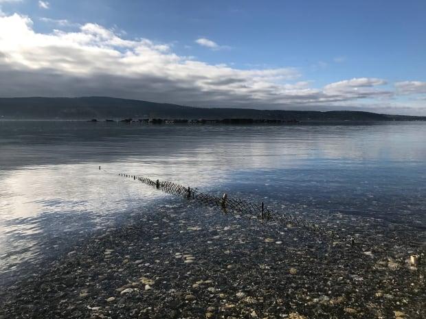 Baynes Sound shellfish growing