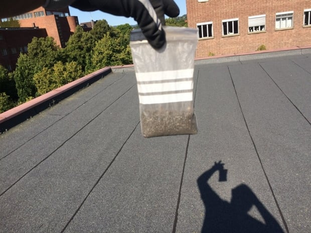 Sample from a roof in Norway