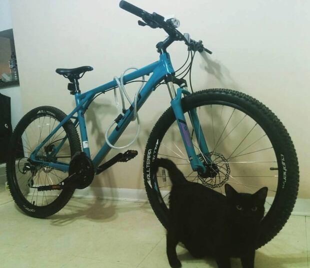 bike-thefts-moncton-map