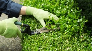 Declutter your garden with a good pruning before spring