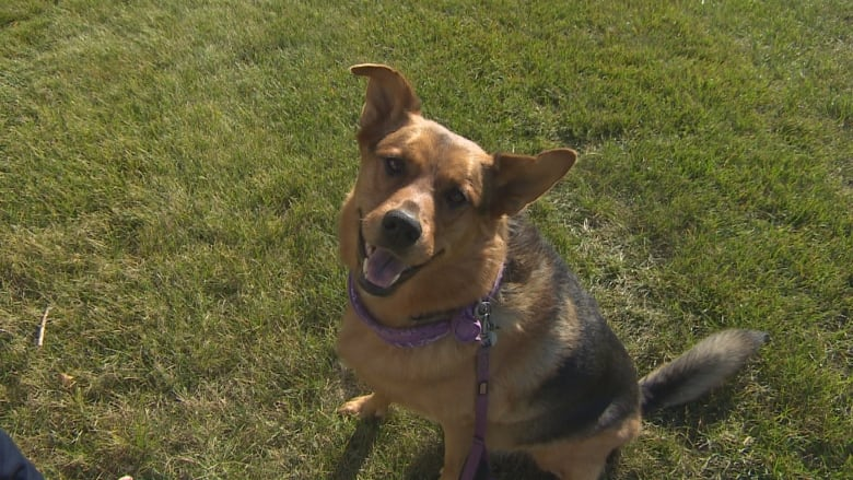Regina woman upset after dog attacked, argues lack of