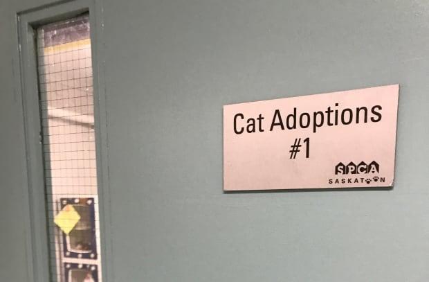 Cat adoption room at Saskatoon SPCA August 2017