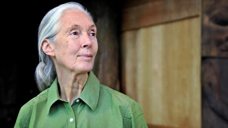 Jane Goodall - copyrighted