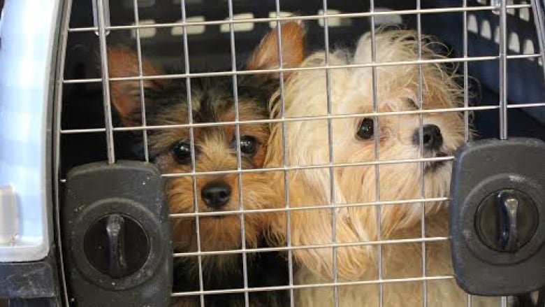 A situation of absolute neglect': 20 dogs seized from B C