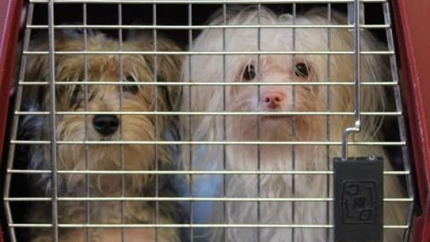 The Ottawa Humane Society will stop picking up injured street animals, after questions of what issues were their responsibility.