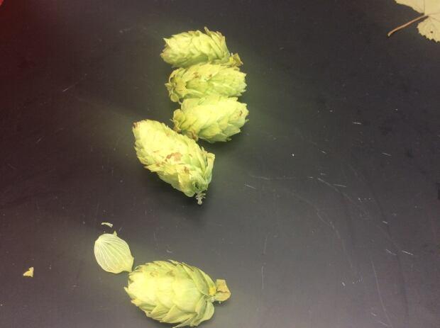 PEI hops 7