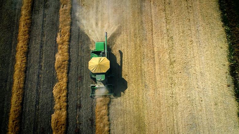 China has stopped buying Canadian canola seed