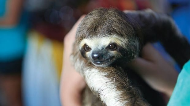 sloth selfie 2