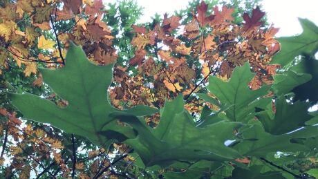 Fall Colours 1
