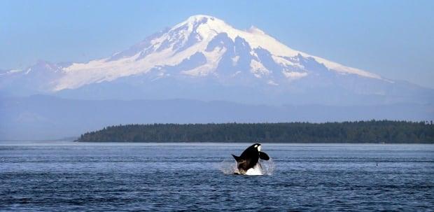 Orcas Vessel Slowdown