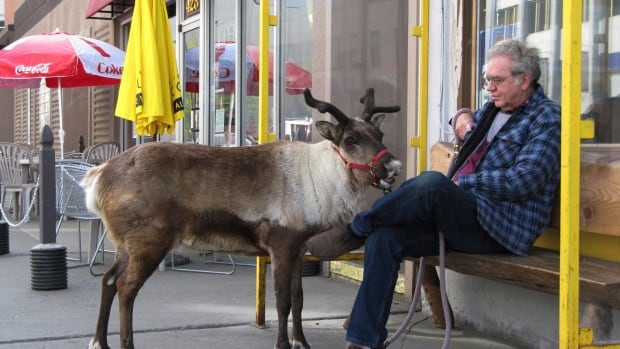 Star the reindeer and her owner, Albert Whitehead, taking a break during a stroll through downtown Anchorage, Alaska, in May 2010.