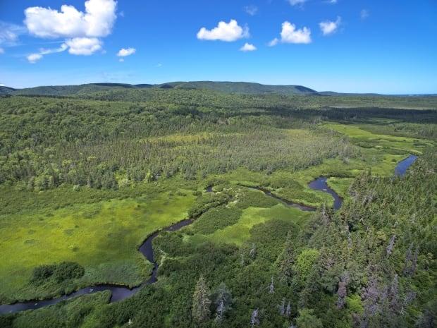 Black River Bog