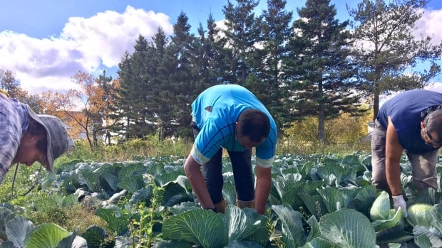 Leonard Vernet is one of 15 Islanders taking part in the Harvest and Prosper Project launched this fall.