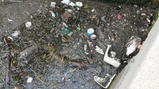 A report by Lake Ontario Waterkeeper says: 'There is rarely a day that goes by where the waters aren't free of objectionable deposit of some kind at Bathurst Quay.' There's a dead rat in the middle-left of this photo, and a dead bird in the middle-right.
