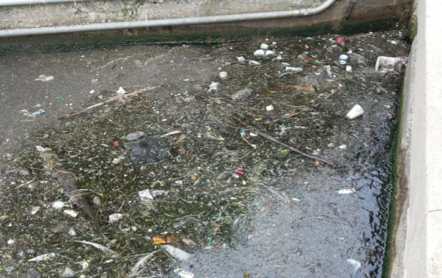 Bathurst Quay pollution