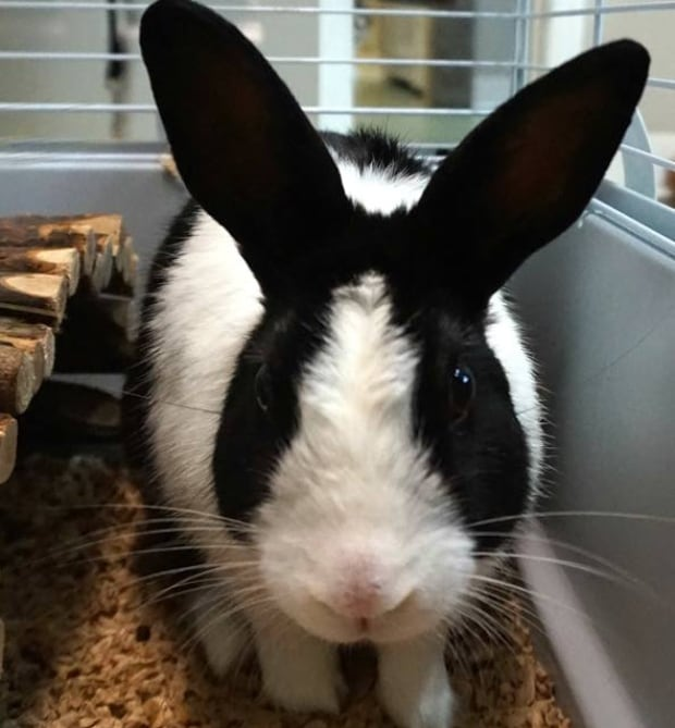 Gander spca abandoned bunnies