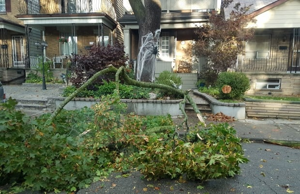 Wild storm fells trees, knocks out power in Toronto