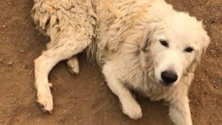 A Dog Called Odin Survives California Wildfires After Refusing To