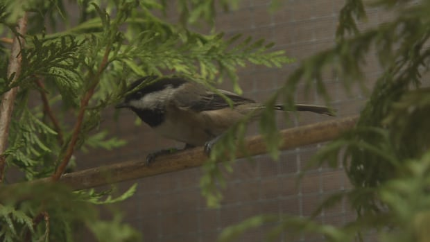 Wildlife Rescue Association of BC injured bird on branch