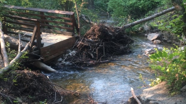 Widespread spring flooding in the Okanagan damaged bridges and pathways at Hardy Falls Regional Park.