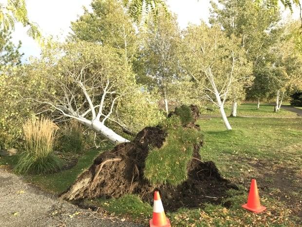 Kamloops trees down