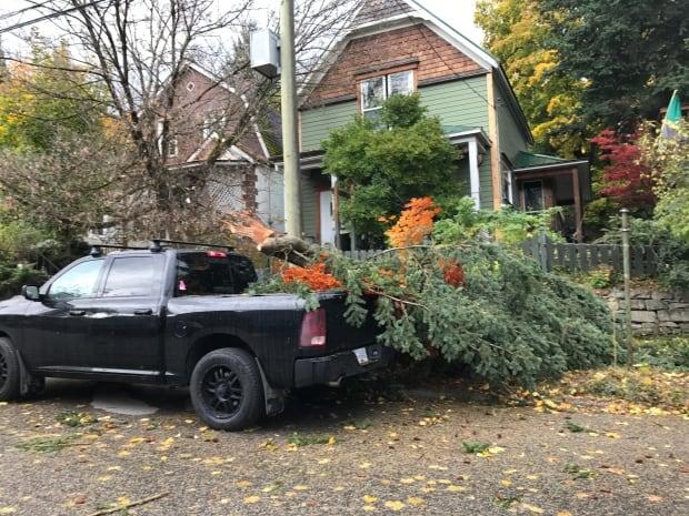 Nelson wind damage