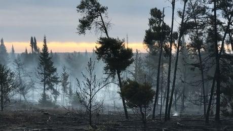 Belair forest fire