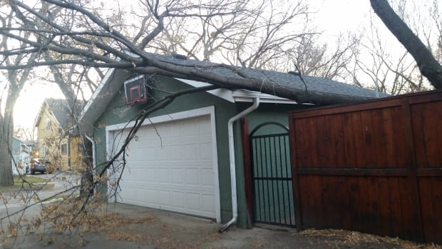 Winds gusted to 119 km/h Tuesday night in Regina, causing trees to split.