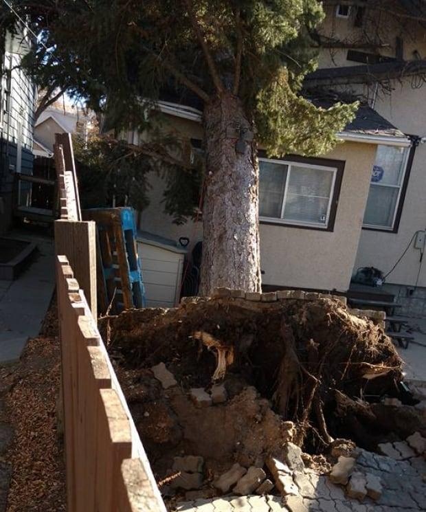 Tree fall backyard wind storm Regina Oct. 17 2017