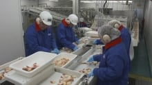 Grand Bank fish plant workers