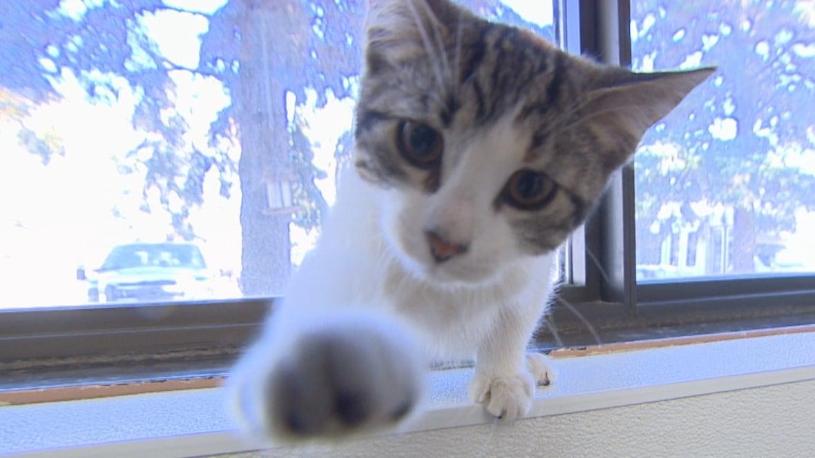 Cats Saskatoon