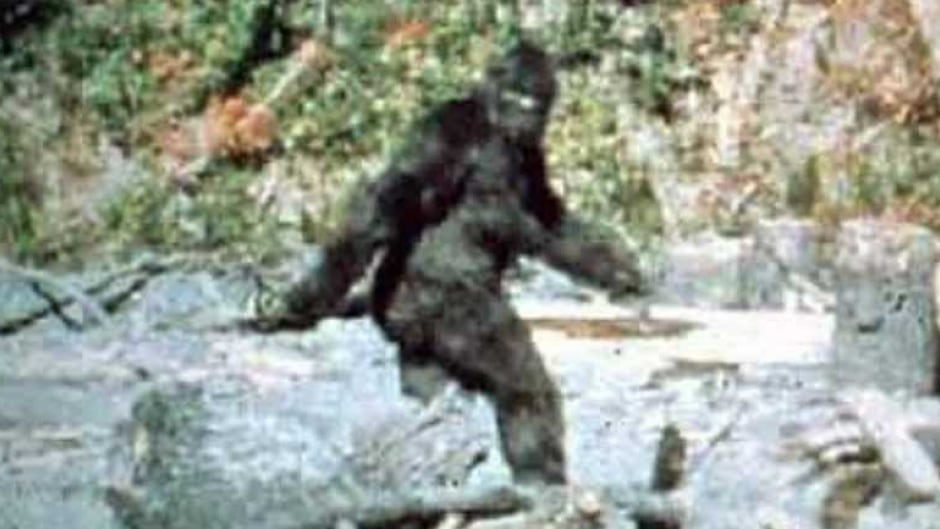 The iconic frame 352 still of the Patterson-Gilmlin film, which allegedly depicts a female Bigfoot looking back at Roger Patterson and Bob Gimlin.